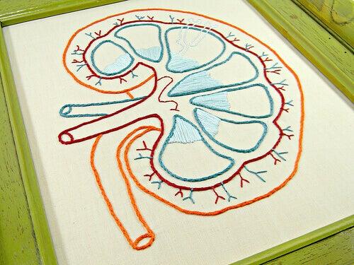 Geborduurde nier