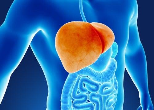 6 schadelijke gewoontes voor de lever