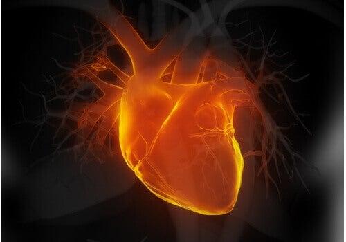 Witte thee beschermt het hart, helpt hartaanvallen te voorkomen en reguleert de bloeddruk.