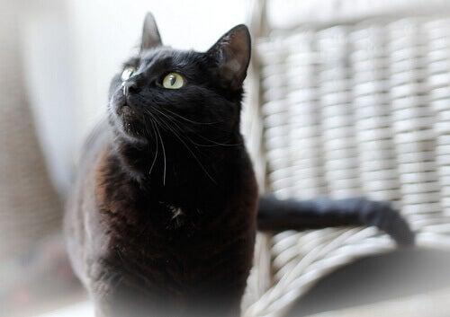 Een toepassing van olijfolie is dat het je kat kan helpen beschermen