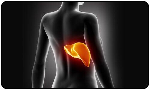 Gewicht verliezen door je lever te zuiveren