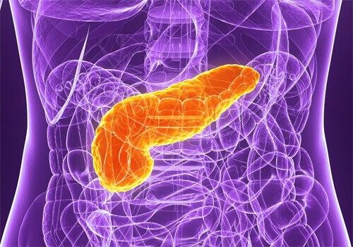 5 tips om voor je alvleesklier te zorgen