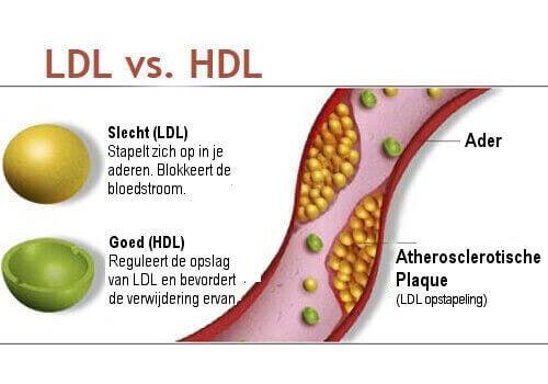 uitleg cholesterol