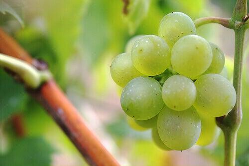 Druiven zijn hele goede natuurlijke diuretica