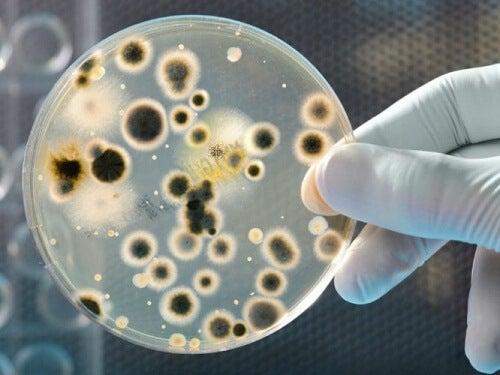 Bacteriën op een geldbiljet