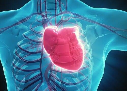 Positie van hart in het lichaam