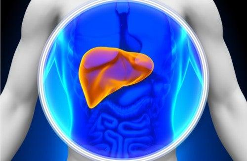 8 voedingsmiddelen die natuurlijk de lever reinigen