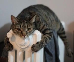 Een kat ligt op de verwarming
