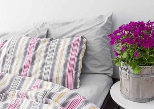 Zuiverende Planten Slaapkamer : Hoe krijg je een gezonde slaapkamer gezonder leven