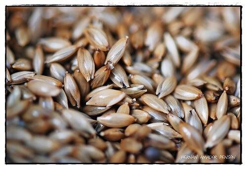 Je cholesterol verlagen met planten vogelzaadthee