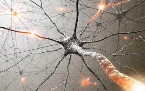 6 medicinale planten om geheugenverlies te verbeteren
