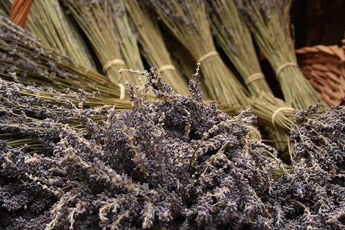 Lavendel tegen een hoge bloeddruk