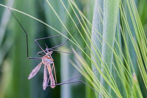 Middelen tegen muggen met citronella