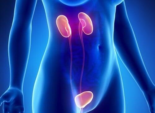 Ontdek 10 symptomen van nierfalen