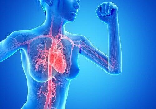 Cardiotraining