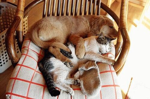 Slapende Hond en Kat
