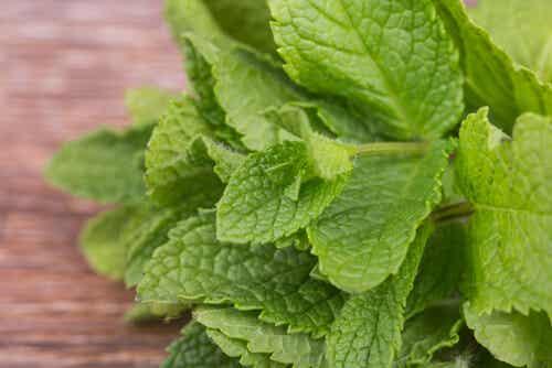 5 voordelen van pepermunt voor je gezondheid
