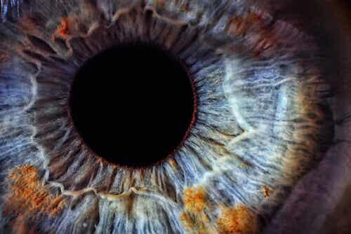 Wat je ogen kunnen zeggen over je gezondheid