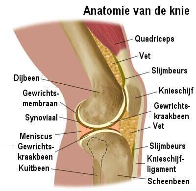 knie-anatomie