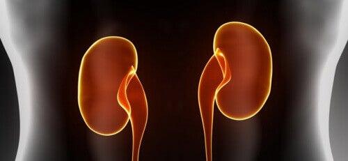 Groenten die de nierfunctie helpen te verbeteren