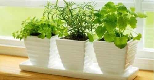 10 planten die positieve energie aantrekken
