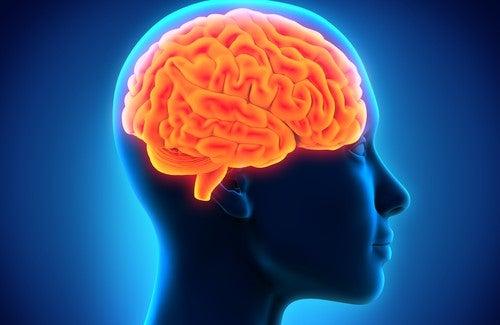 Voedingsmiddelen om je geheugen te verbeteren