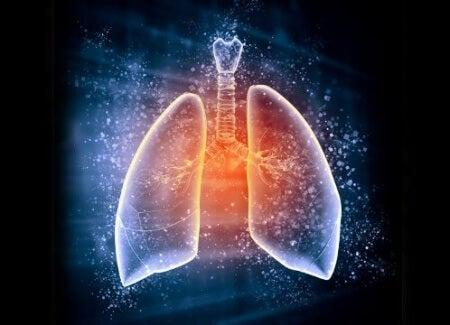 Waarom je longen ontgiften