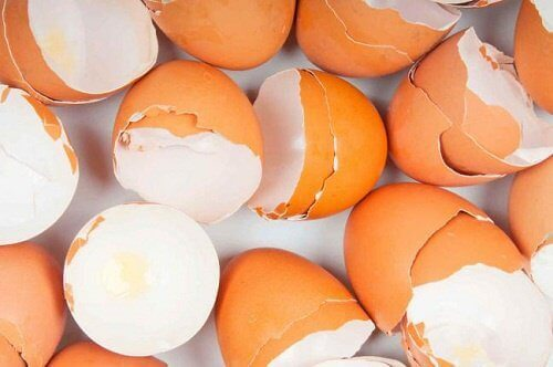 15+ verrassende toepassingen van eierschalen