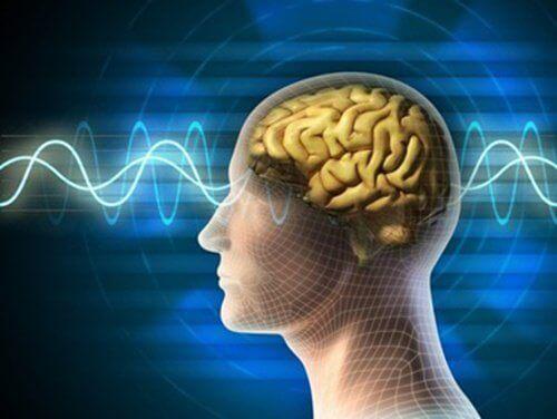 hersenen4
