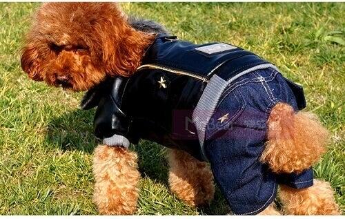 Kleding voor je huisdier met je oude jeans