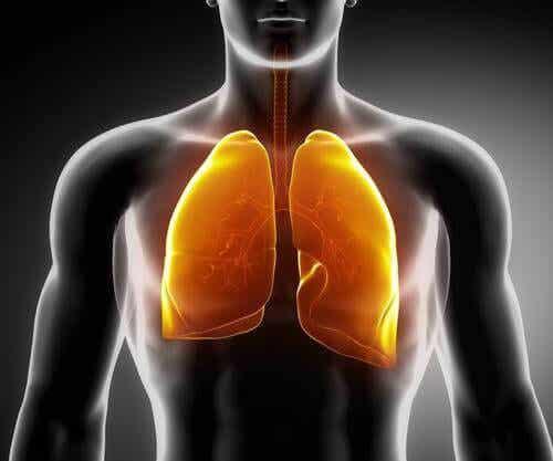 3 thee-recepten voor sterkere longen