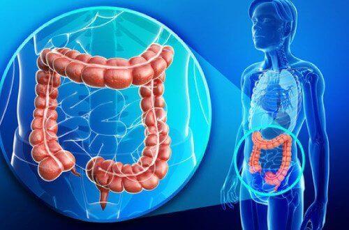 Tips voor een gezonde dikke darm en gewichtsverlies