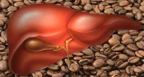 Lever en Koffie