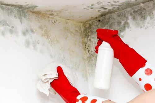 Huishoudtips om schimmel te verwijderen