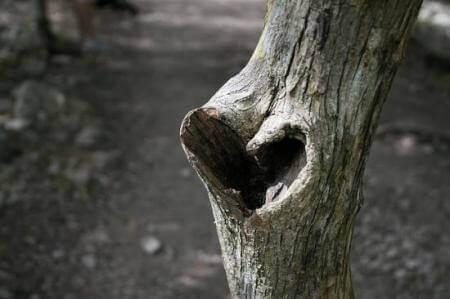 Hart in een boomstam
