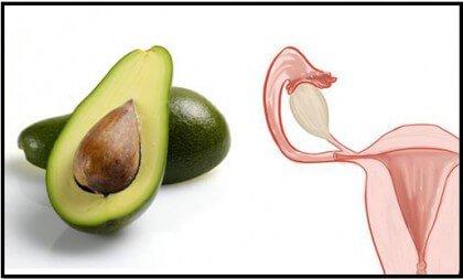 Avocado en Baarmoeder