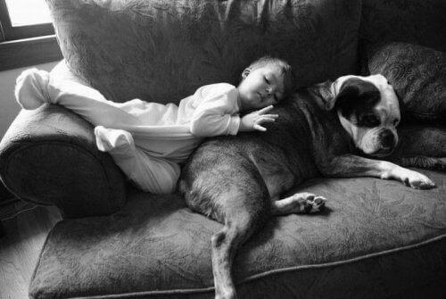 Slapend Kind en Hond