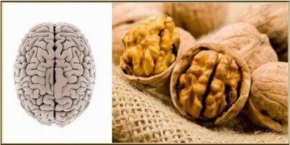walnoot en hersenen