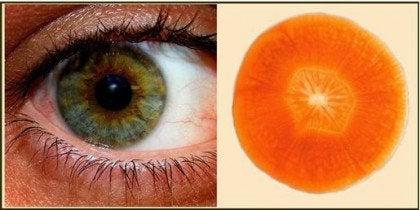 wortel-oog