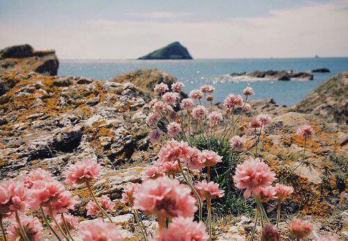 bloemen bij zee