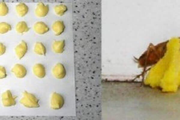 Boorzuur en Eieren
