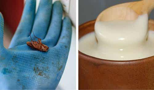 Maak kakkerlakken voor eens en voor altijd dood