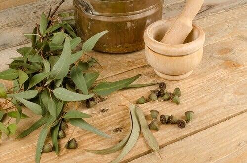 Eucalyptus tegen Muggen