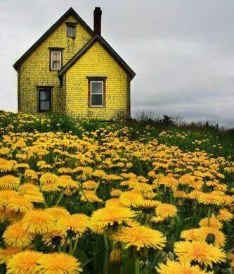 de storm veld met paardebloemen en geel huis