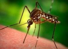 Muggen Afweren