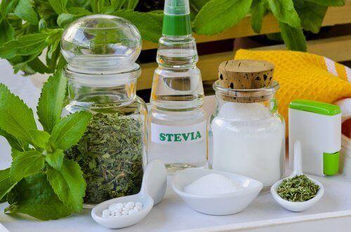 Stevia kweken