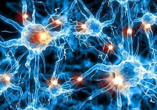 Gezonde Hersenen