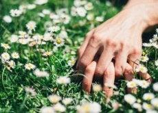 hand-daisies