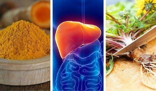 Je lever beschermen met deze 6 kruiden