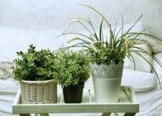 planten-voor-je-kamer